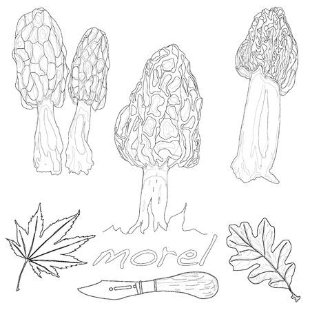 morel mushroom vector illustration isolated Illustration