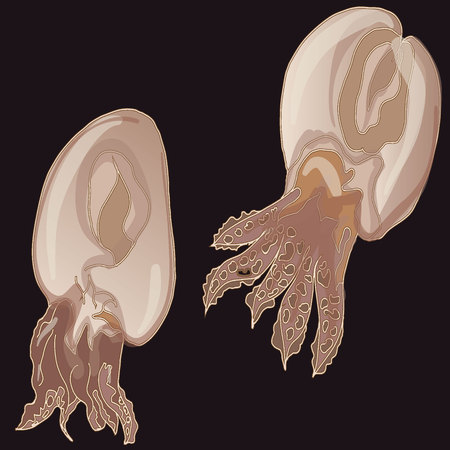 mollusk: Cuttlefish vector drawing. Edible marine mollusk with tentacles isolated on dark background. Illustration