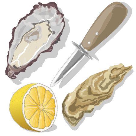 Shucked Oysters with lemon on whight background Illustration
