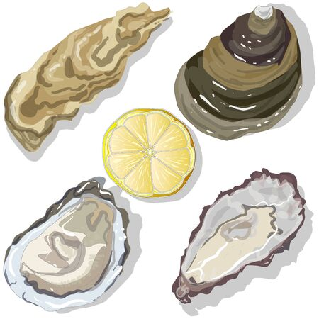 expensive food: Shucked Oysters with lemon on whight background Illustration