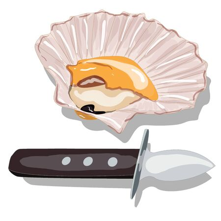 scallop: Scallop vector image isolated on white background