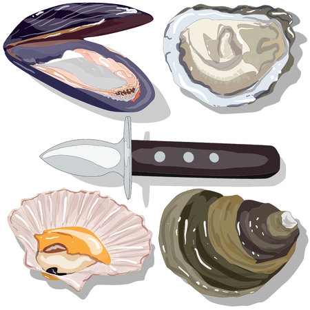 oceanic: Seashell vector collection isolated on the white background Illustration