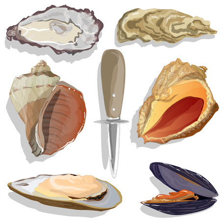Seashell vector collection isolated on the white background Illustration