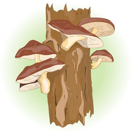 traditional chinese medicine: Shiitake mushroom growing on trees vector set isolated Illustration