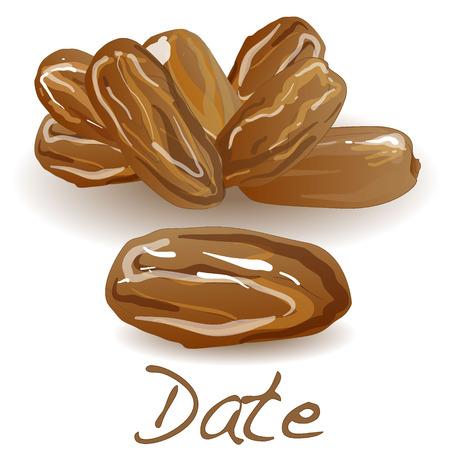 date fruit: Date fruit. Dry date fruit isolated. Vector illustration. Illustration