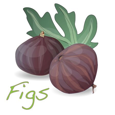 Fresh figs isolated on white. Vector illustration7