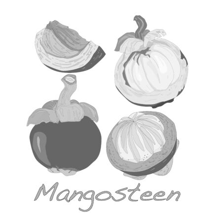 thai dessert: Ripe mangosteen isolated on white background. Vector illustration.