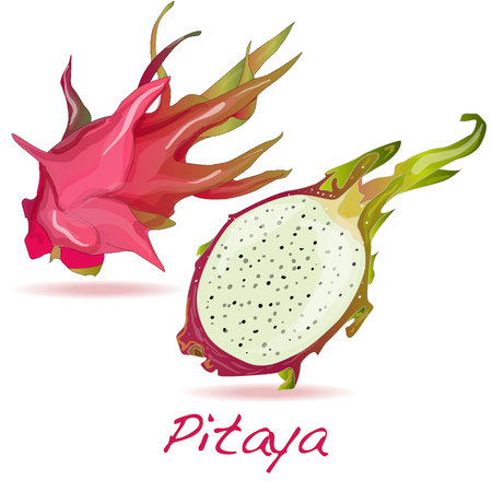 distinctive: Pitaya or Dragon Fruit isolated against white background. Vector