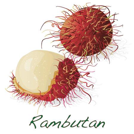 Rambutan sweet delicious fruit isolated on white background. Vector illustration