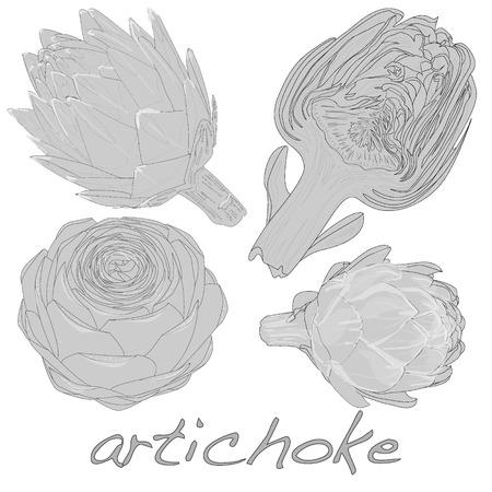 artichoke: artichoke vector isolated on white background Illustration