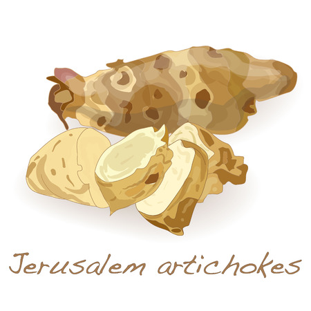 Jerusalem artichoke on a white background