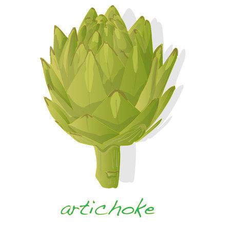 artichoke vector isolated on white background Illustration