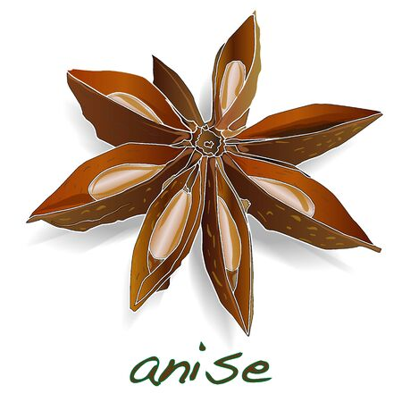 anise: Star anise spice fruit and seeds isolated on white background vector Illustration