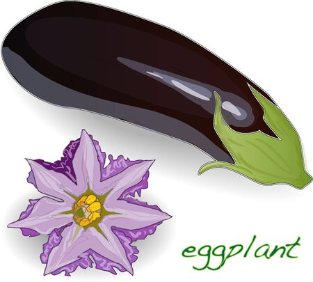 intact: Eggplant or aubergine vegetable vector isolated on white background