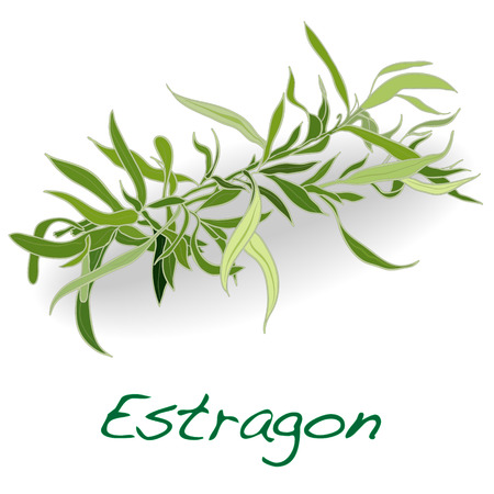 fresh tarragon herb vector isolated on a white background Иллюстрация