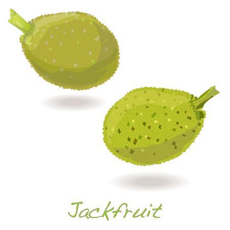 picking fruit: Jackfruit vector isolated on white background Illustration