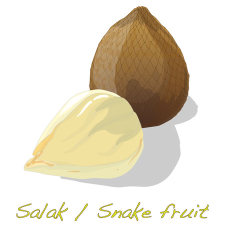 salak: Salak  Snake fruit isolated vector