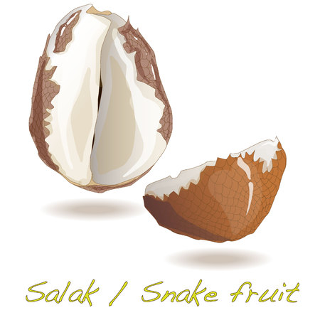 scaly: Salak  Snake fruit isolated vector