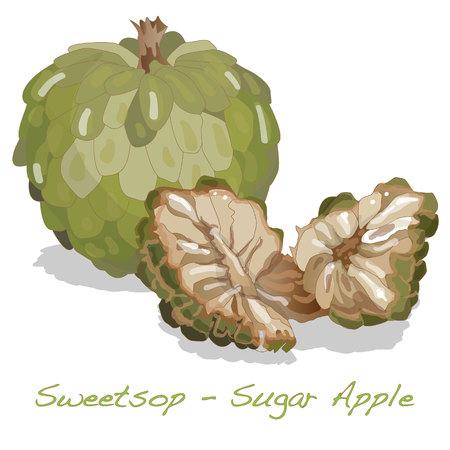 sweetsop: Sugar Apple (custard apple, Annona, sweetsop) vector on white background