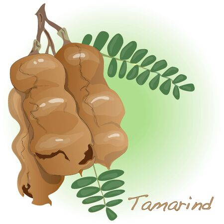Tamarind vector isolated on white background