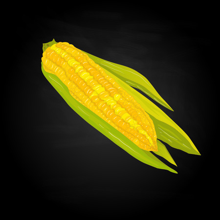 corncob: Corn on the cob kernels isolated