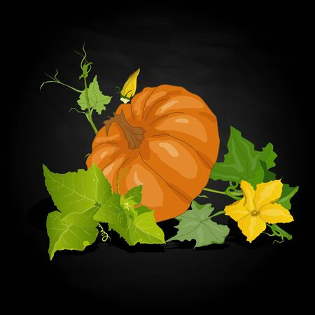 Pumpkin vector illustration isolated