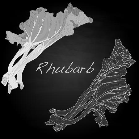 rhubarb: Rhubarb vector illustration isoiated