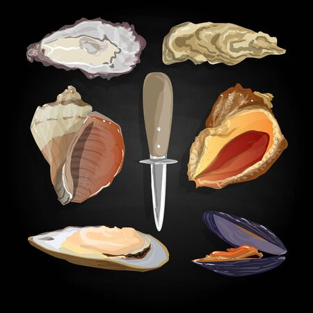 expensive food: Sea shells vector illustration isolated Illustration