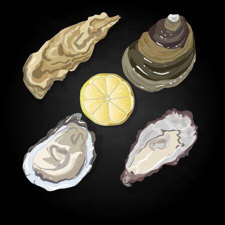 Sea shells vector illustration isolated Illustration