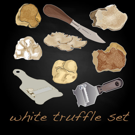 expensive food: truffle vector illustration set Illustration