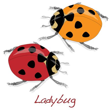 ladybug: Ladybug vector illustration isolated