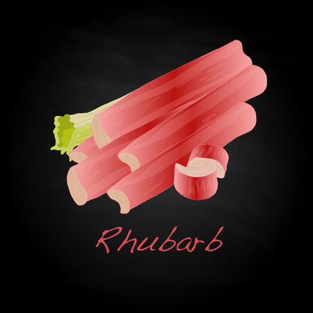 rhubarb: Rhubarb vector illustration isoiated