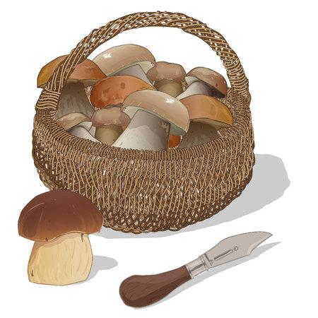 Mushrooms in the basket. Vector illustration. Isolated. Illustration
