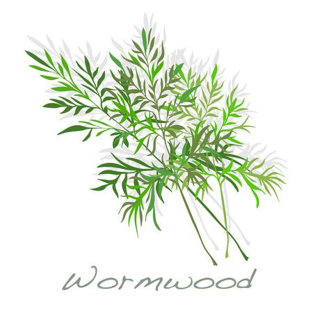 ajenjo: Wormwood. Medical Herb. Vector illustration.