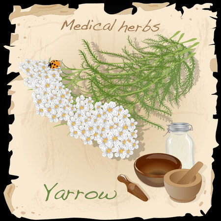 Yarrow. Medical Herb collection. Vector illustration isolated.
