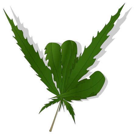 Cannabis leaf vector isolated on white background Illustration