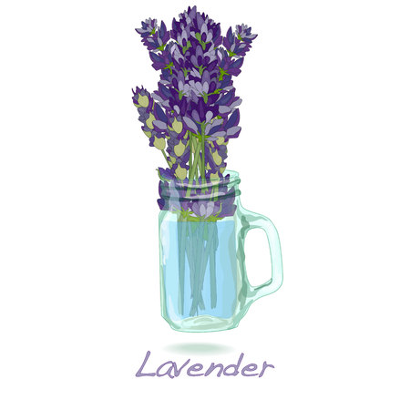 Lavender flower vector isolated.
