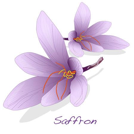 Safran Blume gesetzt. Vector isoliert. Standard-Bild - 68090566