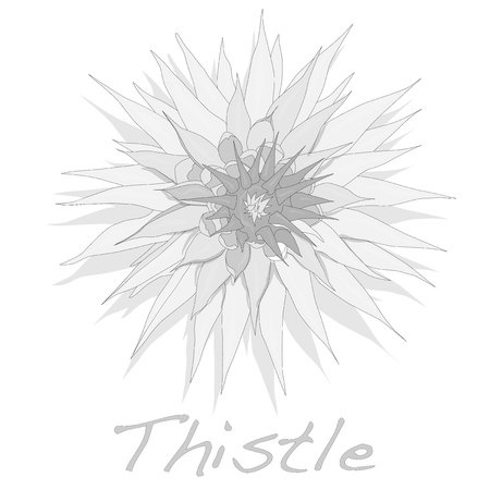 therapeutic: Milk Thistle plant. Scotch thistle. Vector isolated.