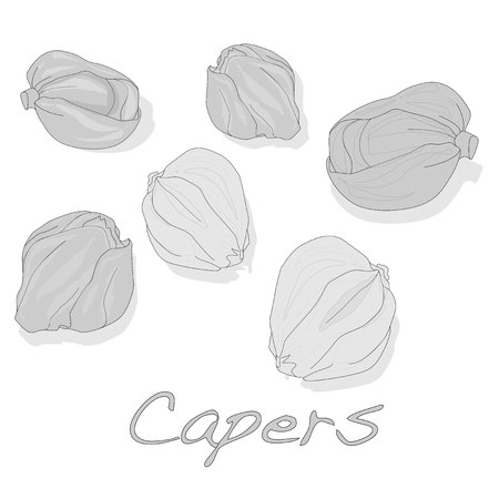 Canned capers vector illustration on white background Ilustração
