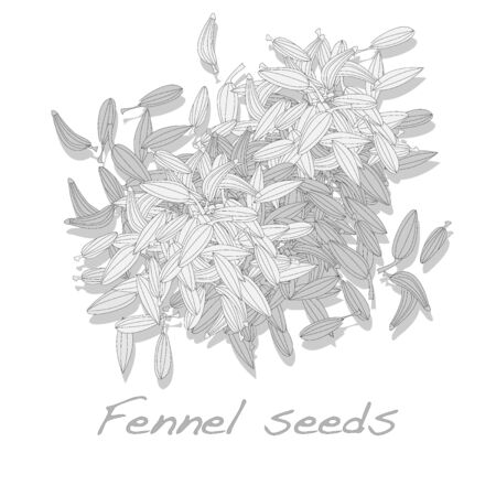 fennel: fennel seeds vector on white background