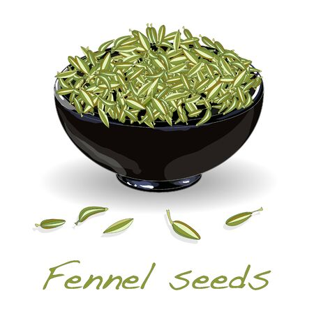 fennel seeds vector on white background