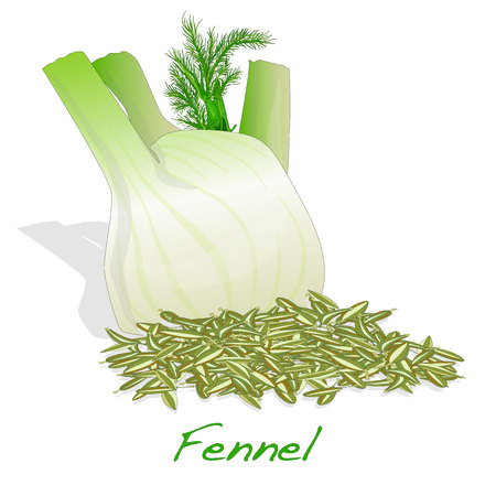 fennel root and seeds vector on white background