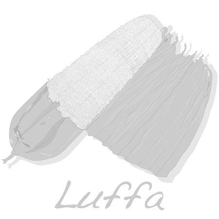 luffa: Fresh Angled luffa fruits vector isolated on white background