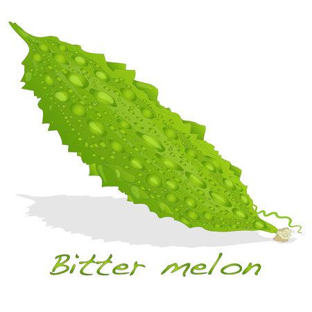 vector de melón amargo aislado en el fondo blanco