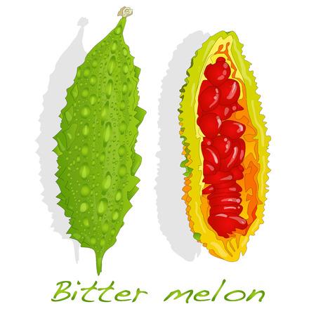 balsam: Bitter melon vector isolated on white background
