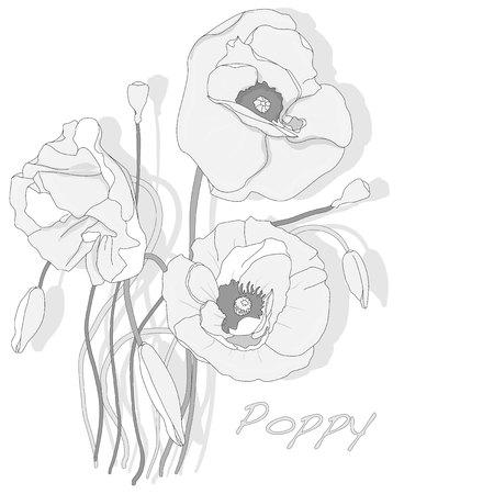 opium poppy: Poppy flower isolated on white background, vector illustration.