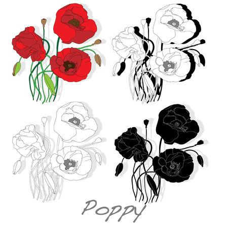 opium poppy: Red Poppy flower isolated on white background, vector illustration.