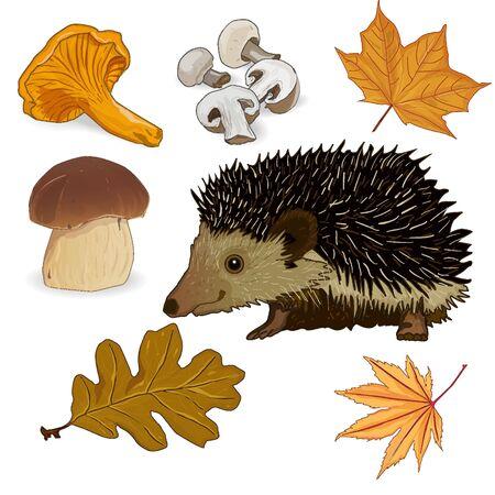 wild mushrooms: wild mushrooms isolated
