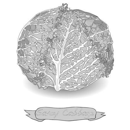 savoy: Savoy cabbage isolated on white